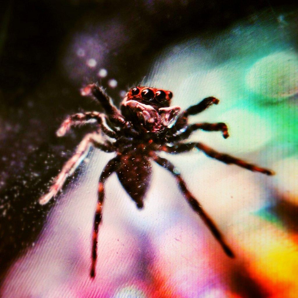 Superstar-Spider-I.jpg