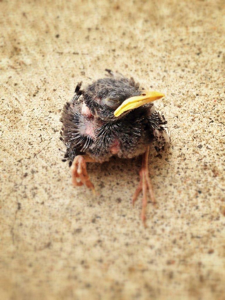 Chick-on-Ground.jpg